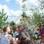Mit dem Schiff zur Baumblüte Werder